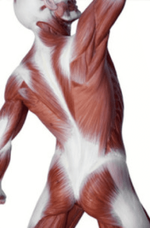 Fascia - an important part of the body